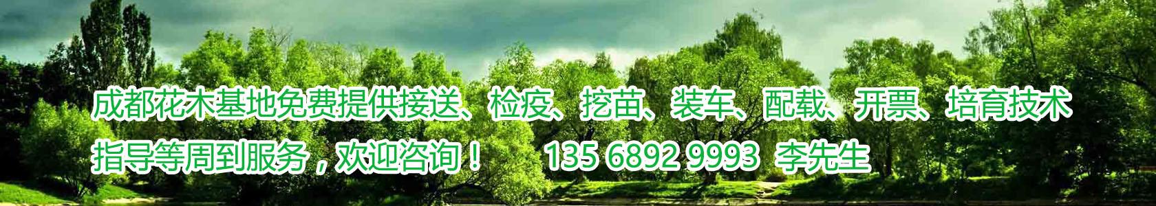 四川成都温江郫县花木苗圃